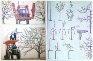 """სურათები 1991 წელს გამოცემული წიგნიდან """"მსხმოიარე ხეების გასხვლა"""
